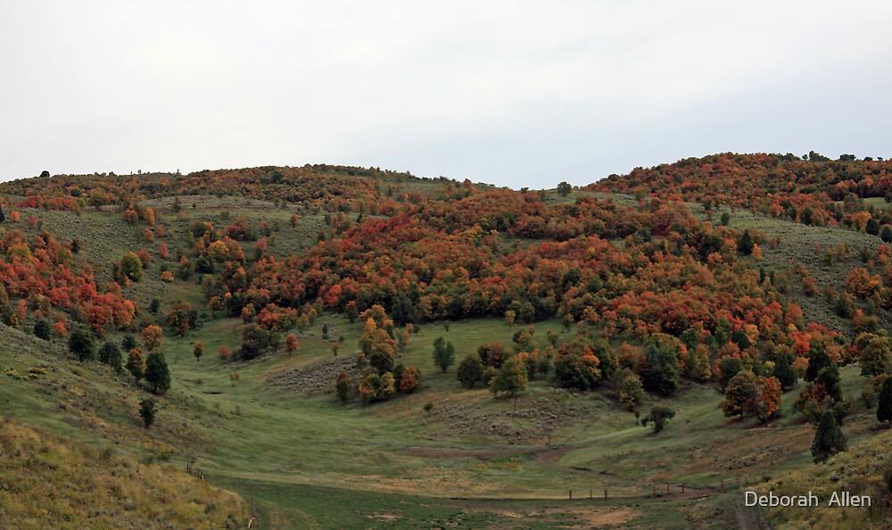 Autumn Pasture by Deborah  Allen