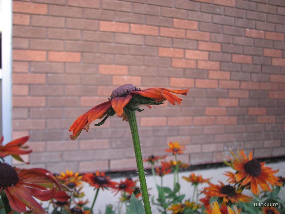 Burnt Orange by wickwire