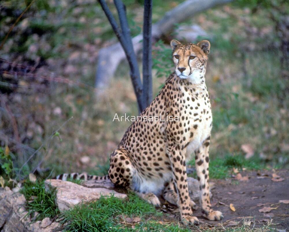 Cheetah by ArkansasLisa