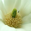 Magnolia heart by mooksool