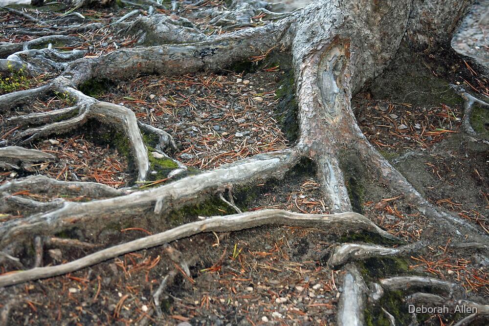 Laying Down Roots by Deborah  Allen