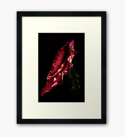 Dragon Arum Framed Print