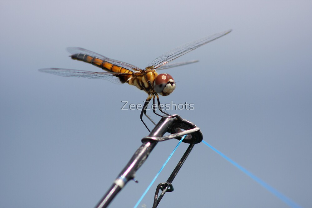 dragonfly by ZeeZeeshots