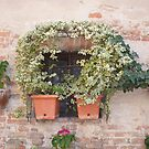 A Tuscan Window by Fara