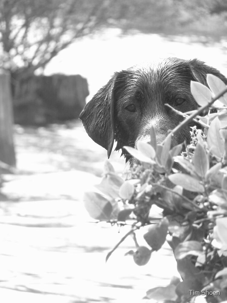 Camera Shy by Tim Shoen