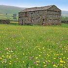 Muker Meadows Upper Swaledale by Colin  Williams Photography