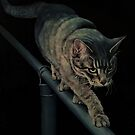 Cat on a Mission by Pam Humbargar