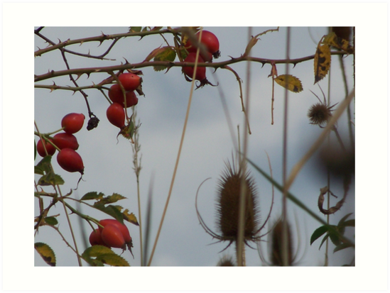Rosehips Amongst Thorns by deb cole