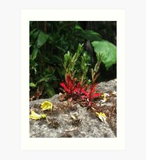 Flowers Growing from the Stone Wall Art Print