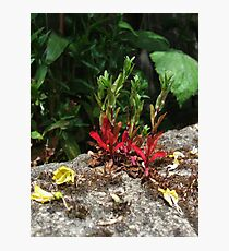 Flowers Growing from the Stone Wall Photographic Print