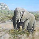 Pilansberg Elephant  by Tom Godfrey