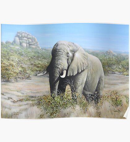 Pilansberg Elephant  Poster