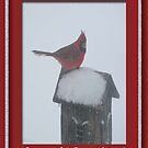Beautiful Red Male Cardinal on a snow covered Birdhouse by toots
