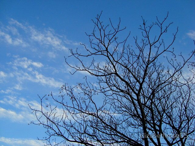 Branch by elizabethrose05