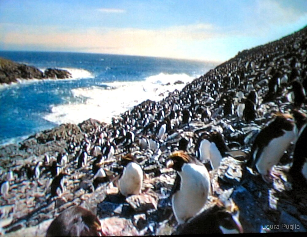 Look at all the Penguins by Laura Puglia