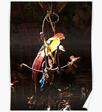 Jose the Tiki Room Parrot Poster
