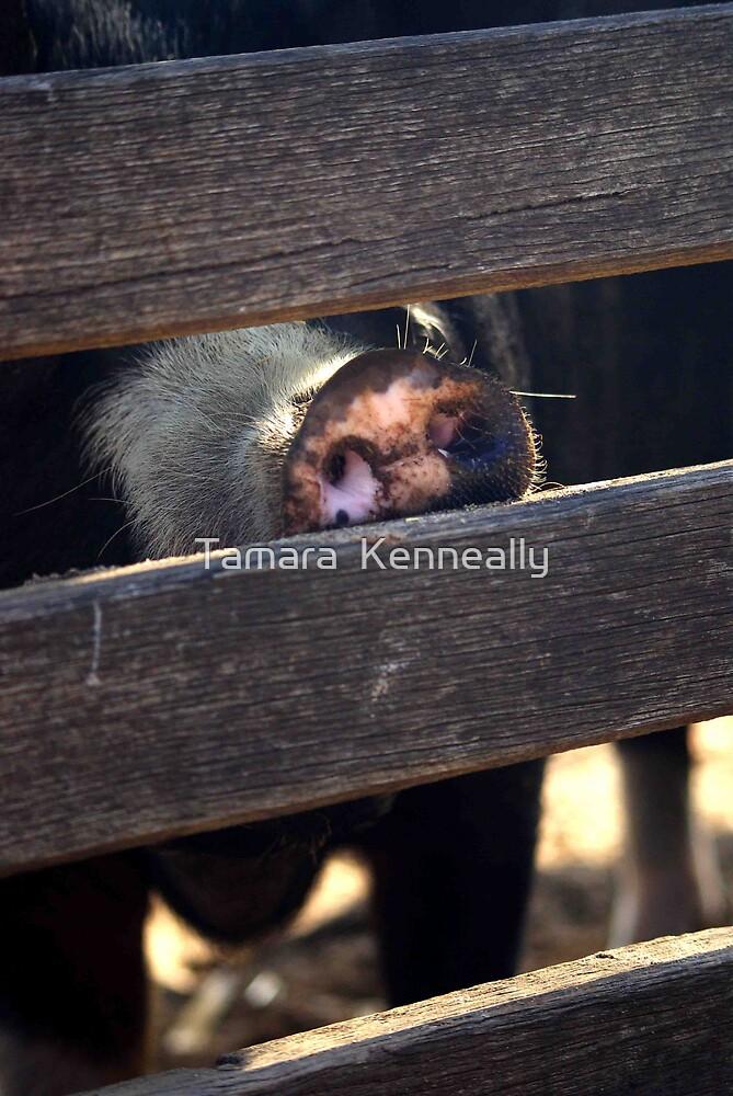 Pig by Tamara  Kenneally
