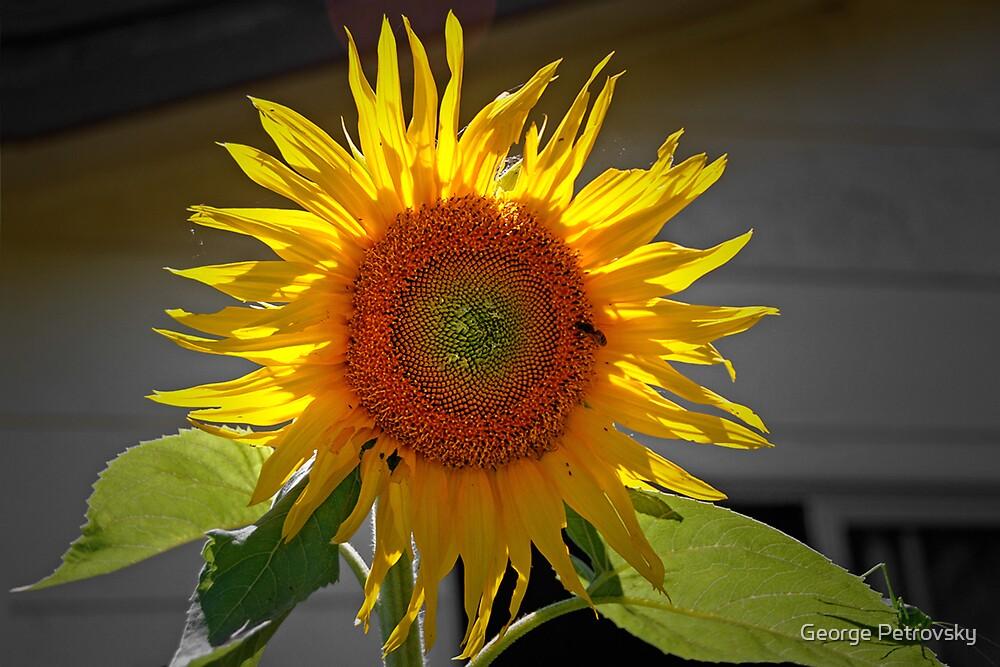 Organic Sunflower by George Petrovsky