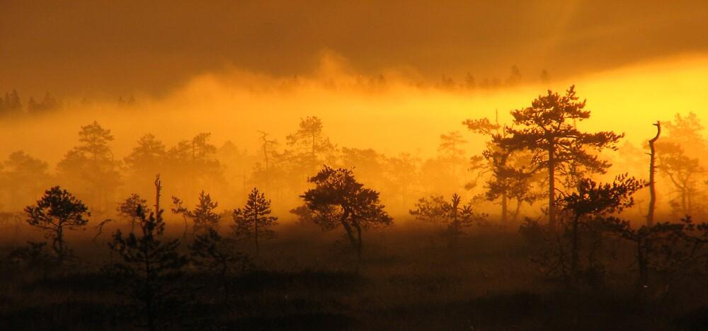 'Morning Gold' by Petri Volanen