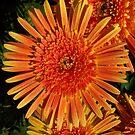 Orange by Daniel Rayfield