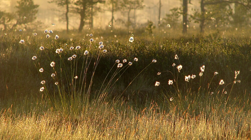 Plants of Light by Petri Volanen