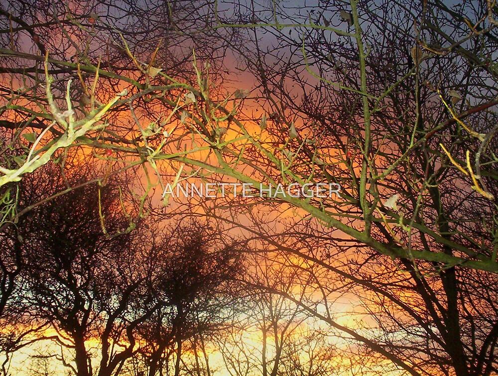 SUNET 5b METFEILD by ANNETTE HAGGER