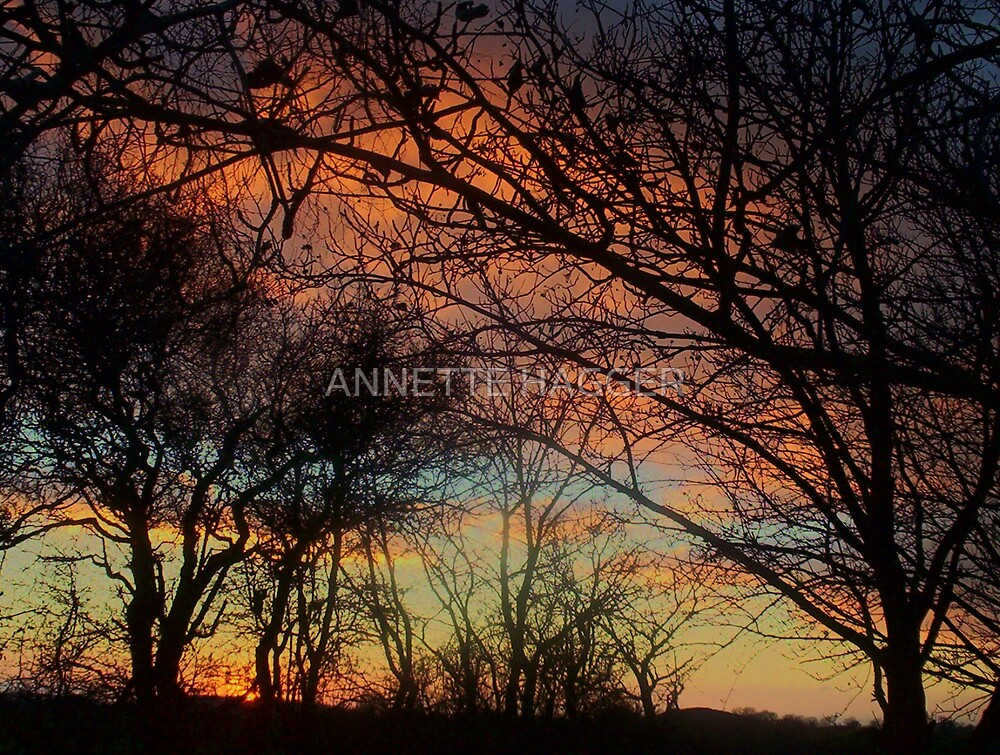 SUNSET 8 METFIELD by ANNETTE HAGGER