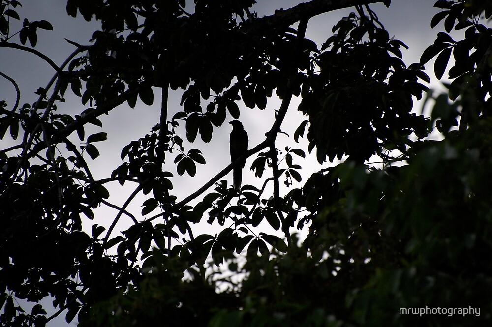 Guatemalan Jay Bird by mrwphotography