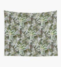 Euphorbia Wandbehang
