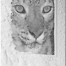 Snow Leopard in a Textured Frame by toots