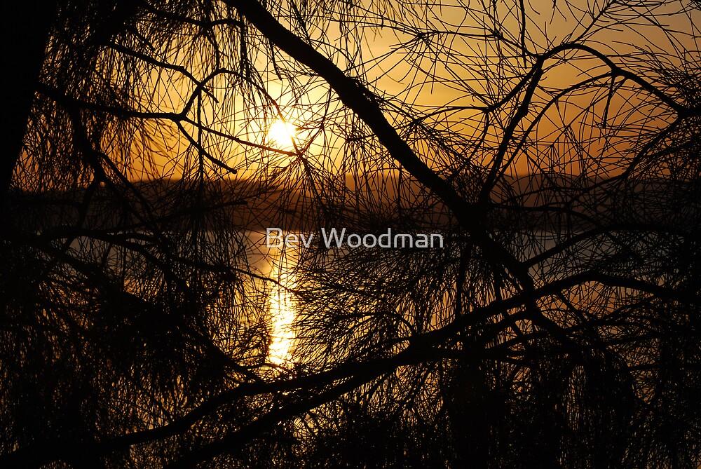 Casuarina Sunset - Green Point Walk Valentine NSW by Bev Woodman