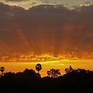 Sunrise on Palmtree - Cambodia by Christophe Dur