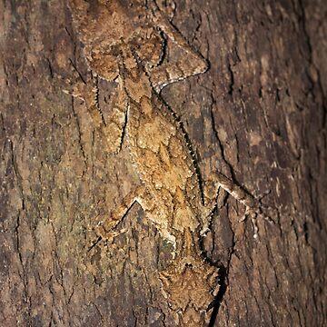 leaf-tailed gecko by colhellmuth