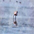 Solitary Flamingo Watercolor by taiche