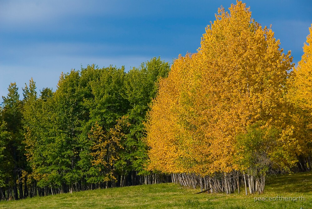 Fall Colors by peaceofthenorth