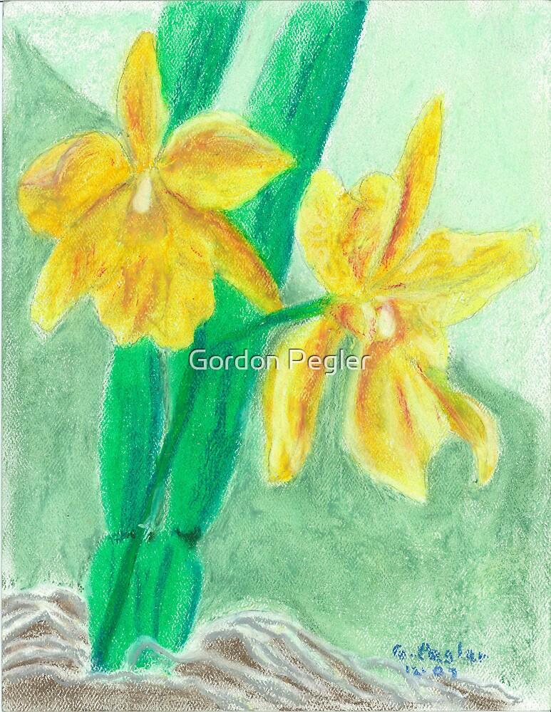 cattlea orchid by Gordon Pegler