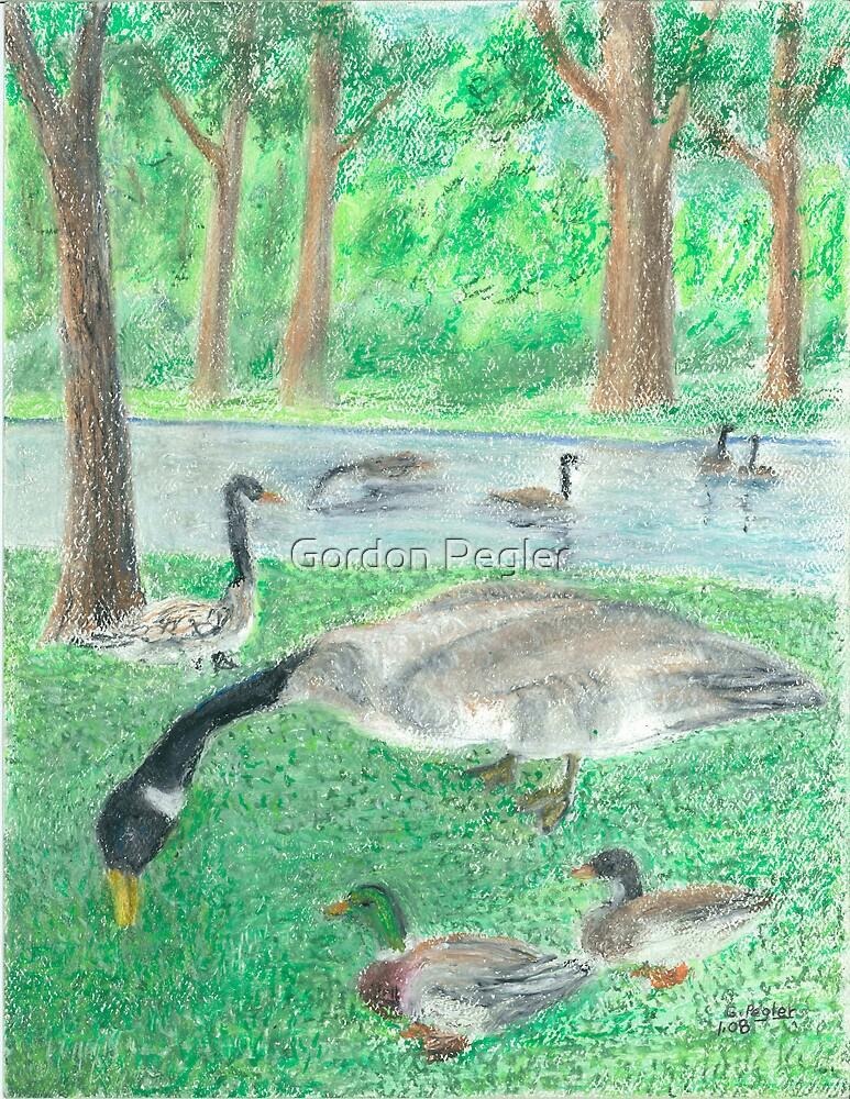 geese and ducks in city park by Gordon Pegler