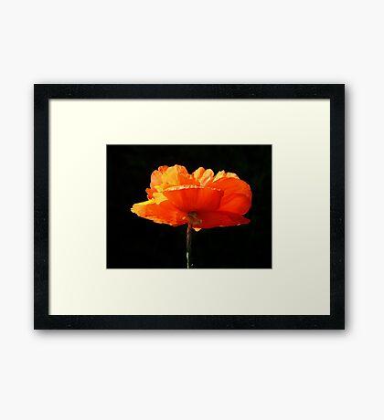Single Poppy Framed Print