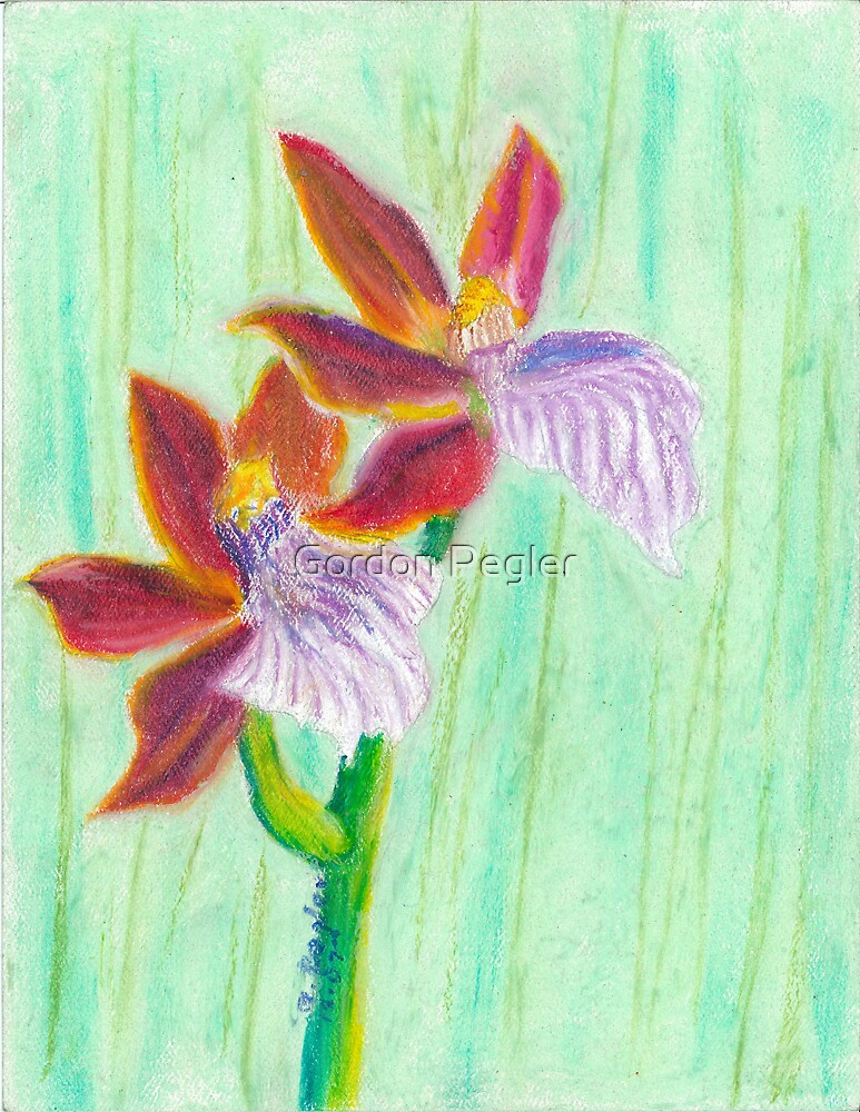 oncidium orchids by Gordon Pegler