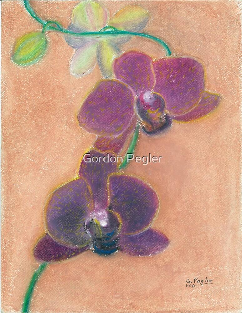Phalaenopsis Orchids ( dark maroon ) by Gordon Pegler