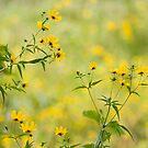 Fields of Yellow by Bahoke