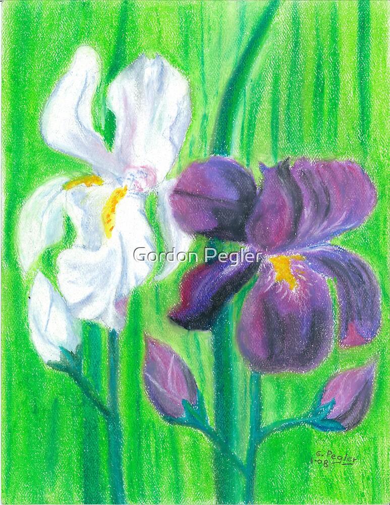 Iris -oilpastels  by Gordon Pegler