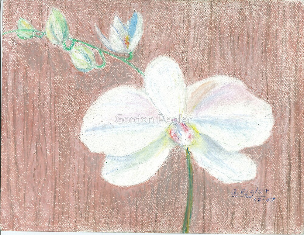White Phalaenopsis Orchid by Gordon Pegler