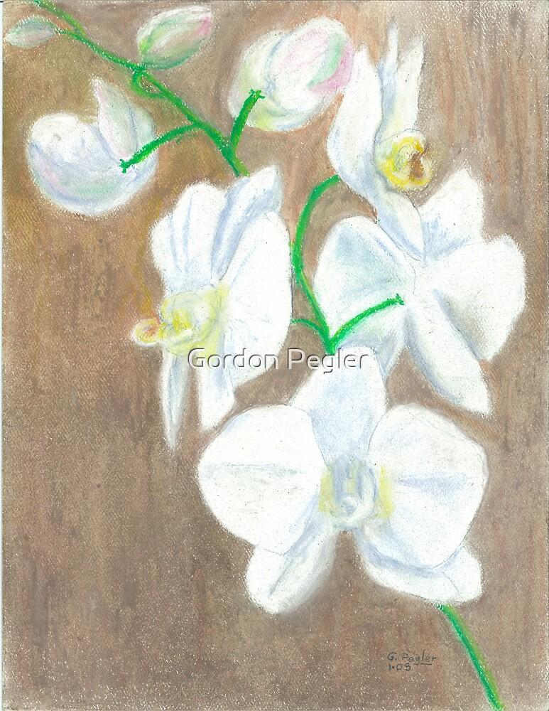 Phalaenopsis Orchid (hybrid) white by Gordon Pegler
