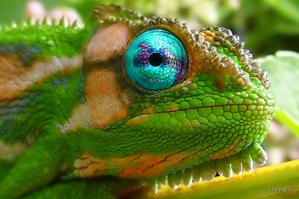 Ol' Blue Eyes by HippyDi