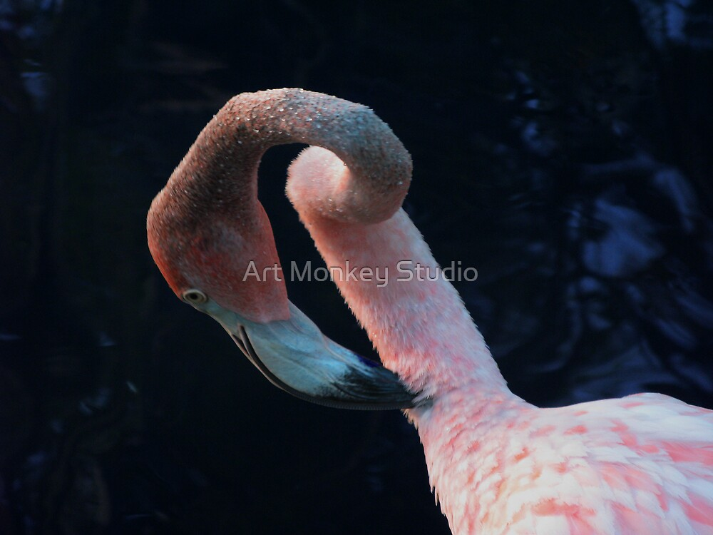 Flamingo by Dan Perez