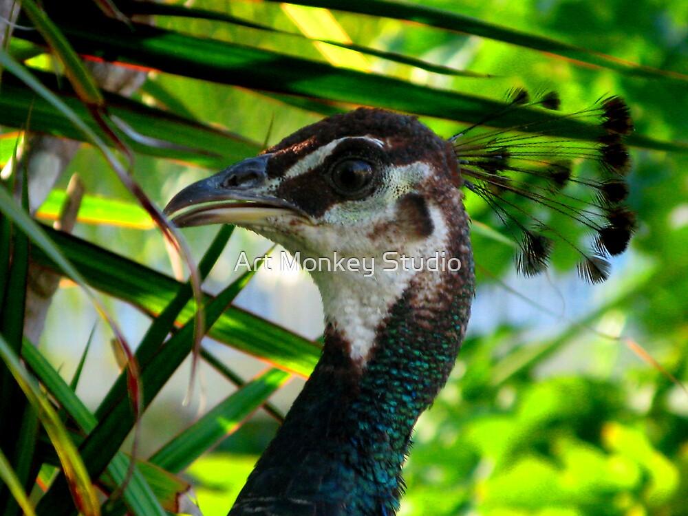 Peacock 1 by Dan Perez
