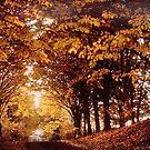 Sous-bois Payenne - Belgium by Gilberte