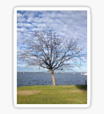Tree with blue sky and clouds - Perth Sticker
