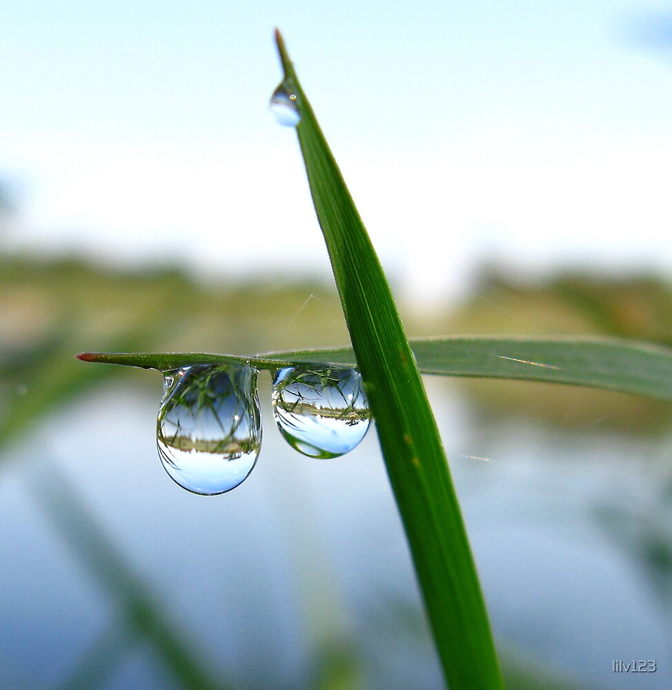 Dewdrop view by lilv123